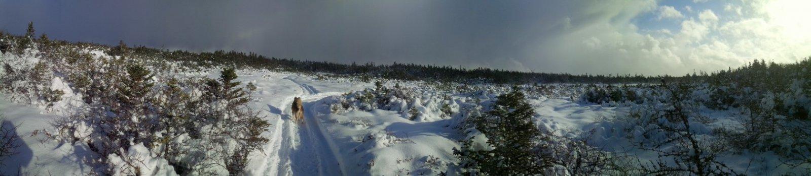 Bog_after_snow_storm.jpg