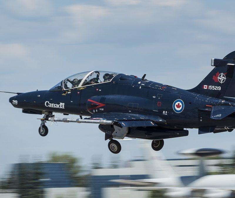 Hawk-Copy-800x675.jpg