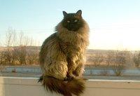 RRUUFF_cat_ Fletcher.jpg
